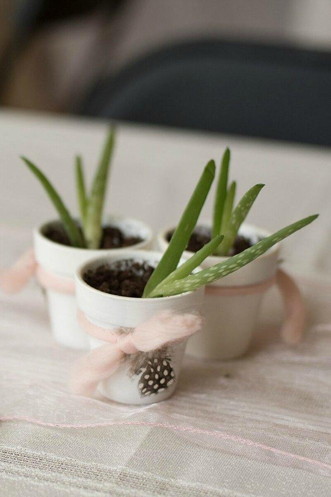 Small pot plants boho party favors