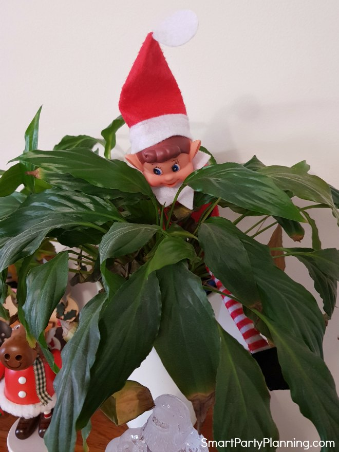 Elf on the shelf in a plant